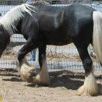صور احصنه عجيبه 14