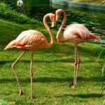 اجمل الصور الرومنسيه للحيوانا1 Size:107.0 Kb Dim: 500 x 427
