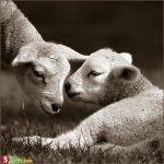 اجمل الصور الرومنسيه للحيوانا2