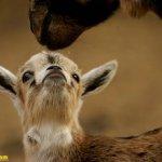 اجمل الصور الرومنسيه للحيوانا10