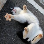 قطط ولقطات2