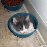 قطط ولقطات4
