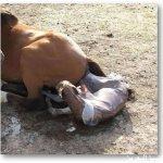 شاهدو عملية ولادة الخيل بالتف14