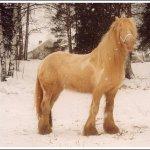 اغرب انواع لخيول1