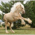 اغرب انواع لخيول2