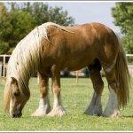 اغرب انواع لخيول3