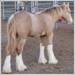اغرب انواع لخيول4
