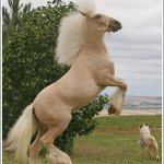 اغرب انواع لخيول5