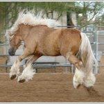 اغرب انواع لخيول6