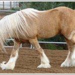 اغرب انواع لخيول7