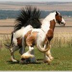 اغرب انواع لخيول8