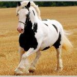 اغرب انواع لخيول9