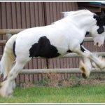 اغرب انواع لخيول10