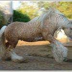 اغرب انواع لخيول11