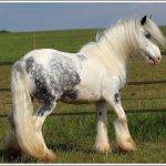 اغرب انواع لخيول12