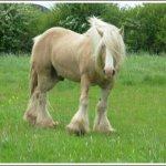 اغرب انواع لخيول13