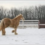 اغرب انواع لخيول15