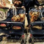 كلاب وكلاب5