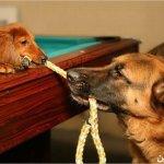 كلاب وكلاب7