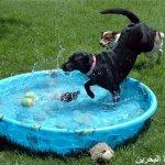 كلاب وكلاب8