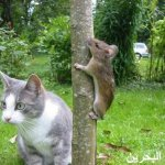 قطط ولقطات1