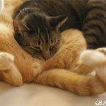 قطط ولقطات3
