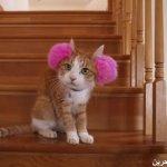 قطط ولقطات7