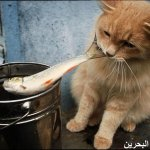 قطط ولقطات10