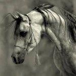 خيول5