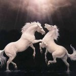 خيول7