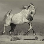 خيول10