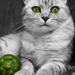 قطط ولقطات6