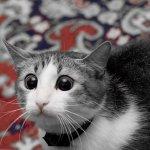 قطط ولقطات11