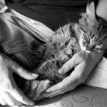 عندما ينام الحيوان4
