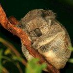عندما ينام الحيوان5