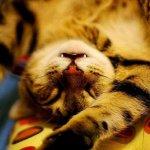 عندما ينام الحيوان7