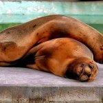 عندما ينام الحيوان8