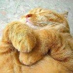عندما ينام الحيوان9