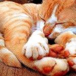 عندما ينام الحيوان10