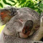 عندما ينام الحيوان13