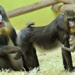 اضحك مع القرود1