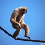 اضحك مع القرود2