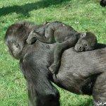 اضحك مع القرود3