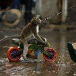 اضحك مع القرود4