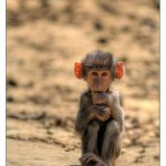 اضحك مع القرود5