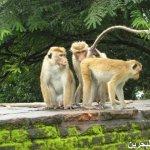 اضحك مع القرود7