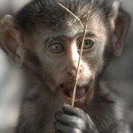 اضحك مع القرود8