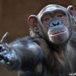 اضحك مع القرود9