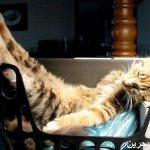 قطط ولقطات5