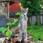 قطط ولقطات8